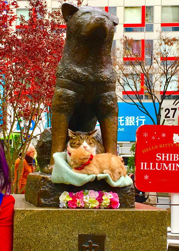 img-shibuya-20171214_01