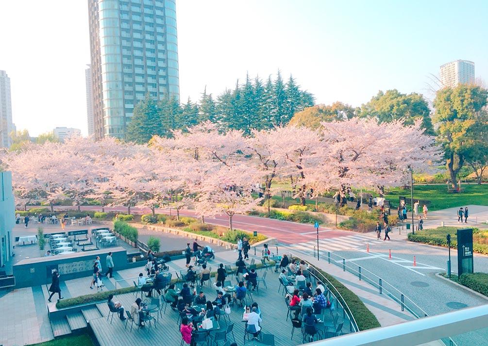 六本木桜2