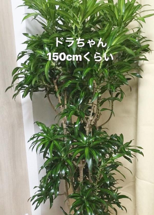 引っ越し~観葉植物~